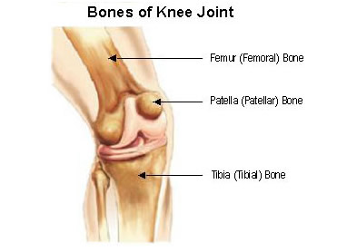 Welcome to the website of dr adriaan van huyssteen in a healthy knee joint the surfaces of these bones are very smooth and covered with a tough protective tissue called cartilage arthritis causes damage to ccuart Choice Image